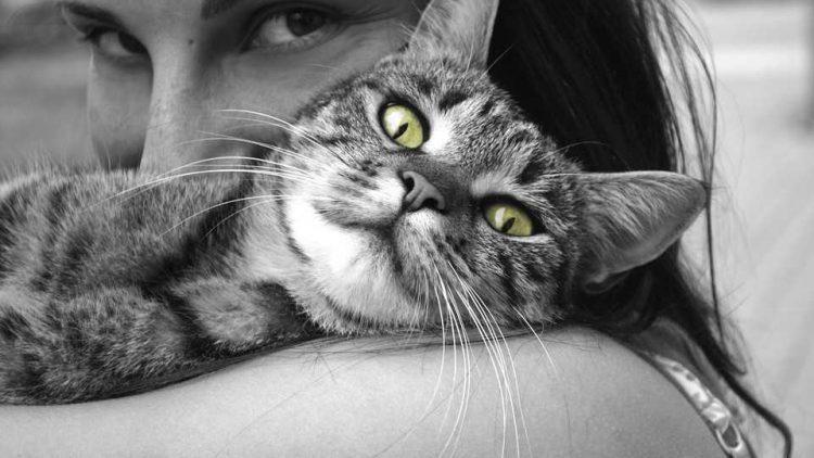 curiosity-killed-cat